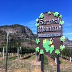 Secrest Vineyard